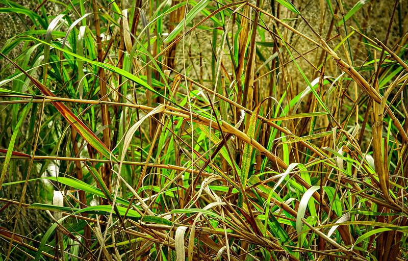 Grass-139.jpg
