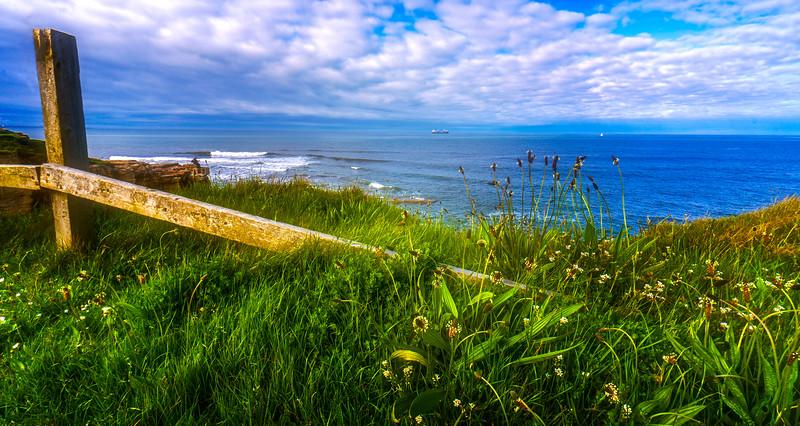 Grass-005.jpg