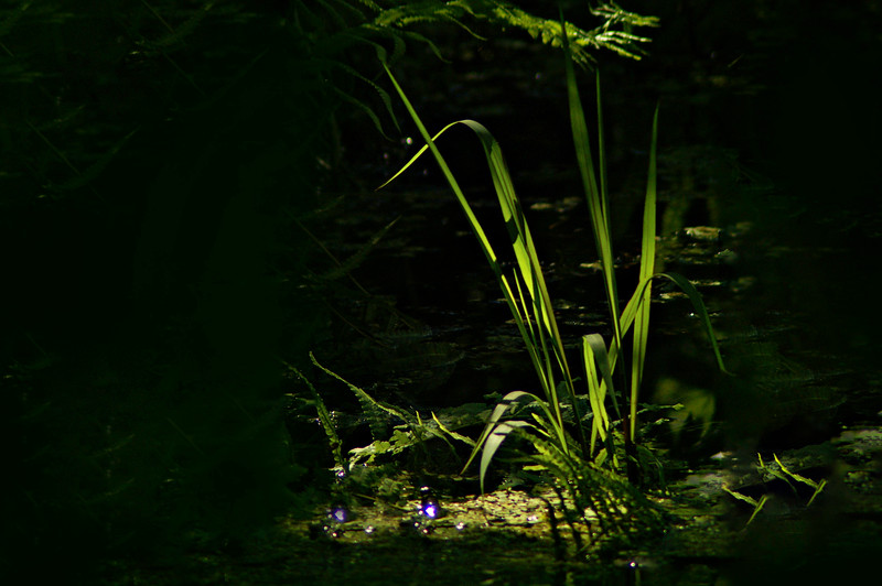 Grass-128.jpg