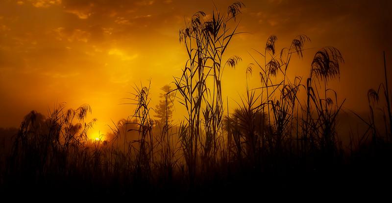 Grass-109.jpg