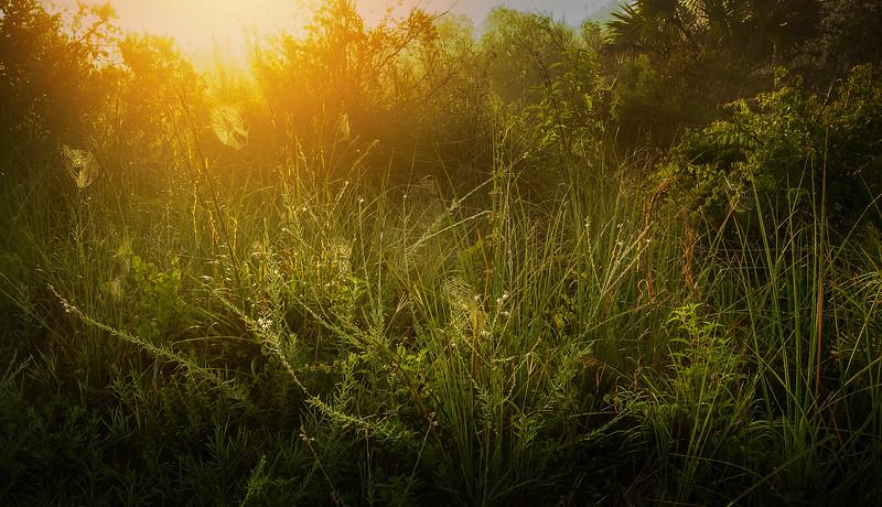 It's Never Just Grass-109.jpg