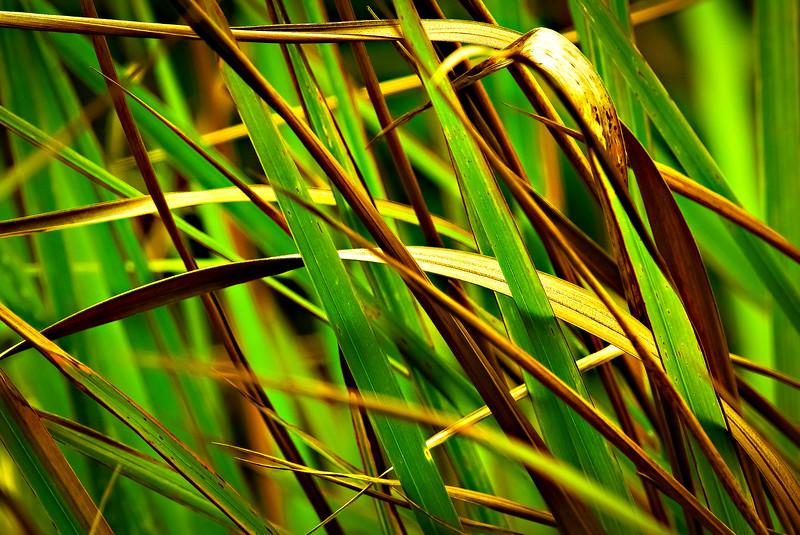 Grass-132.jpg