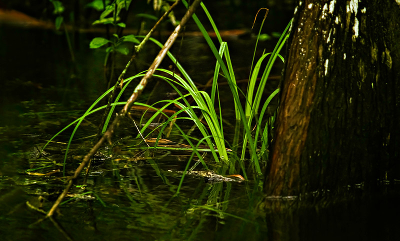 Grass-146.jpg
