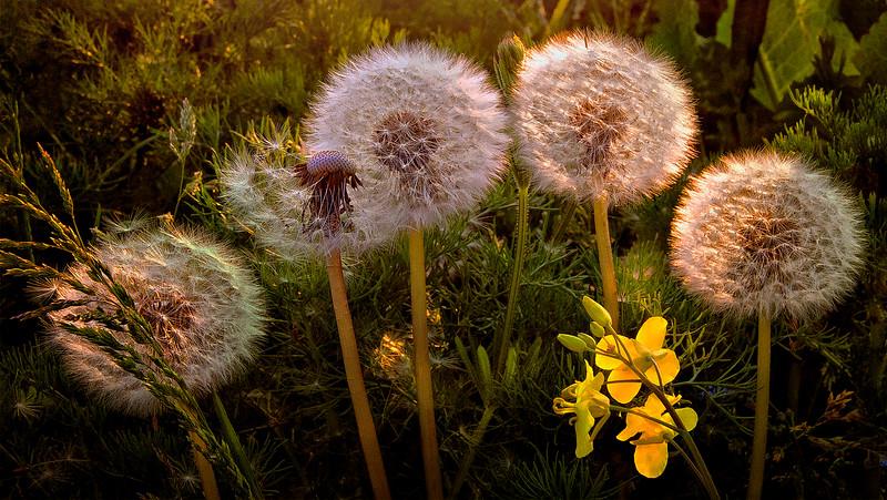 Grass-008.jpg