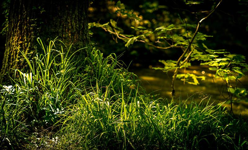 Grass-094.jpg