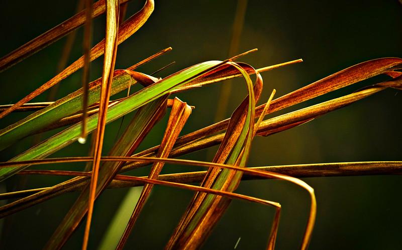 Grass-148.jpg