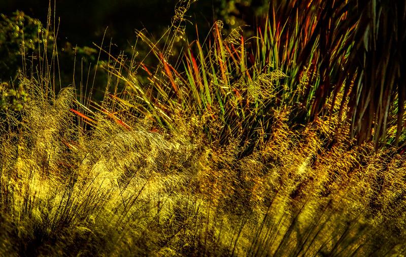 It's Never Just Grass-130.jpg
