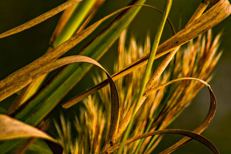 Grass-057.jpg