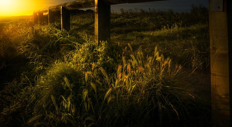 Grass-040.jpg