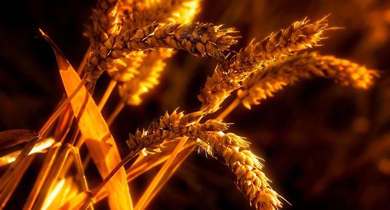 Grass-027.jpg