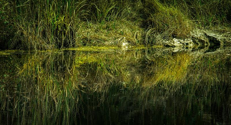 Grass-083.jpg