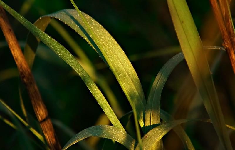 It's Never Just Grass-120.jpg