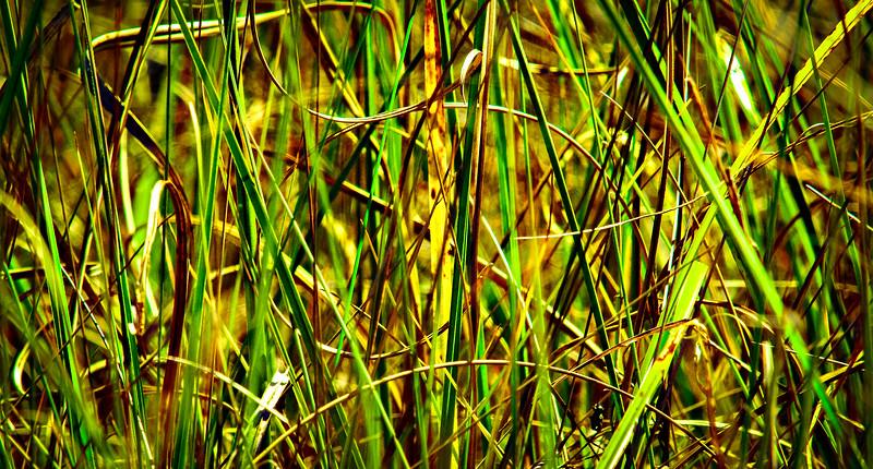 Grass-096.jpg