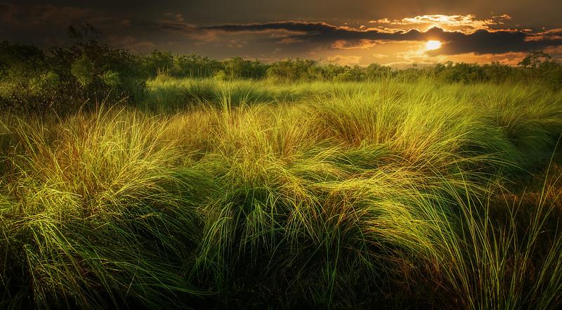 It's Never Just Grass-110.jpg