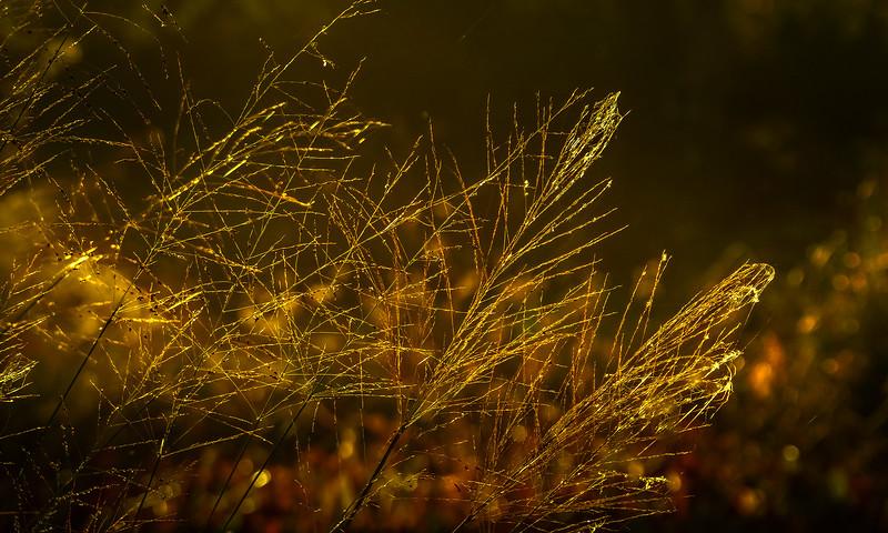 It's Never Just Grass-127.jpg