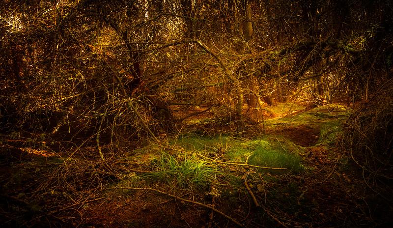 Grass-064.jpg