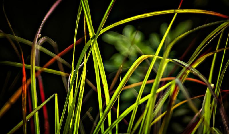Grass-002.jpg