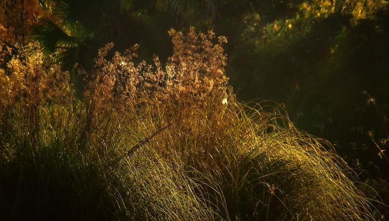 It's Never Just Grass-129.jpg