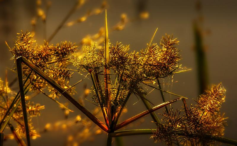 It's Never Just Grass-126.jpg