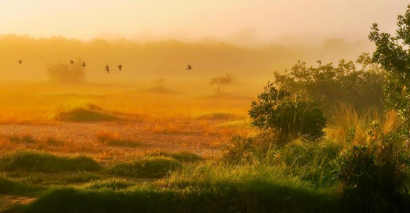 Grass-107.jpg