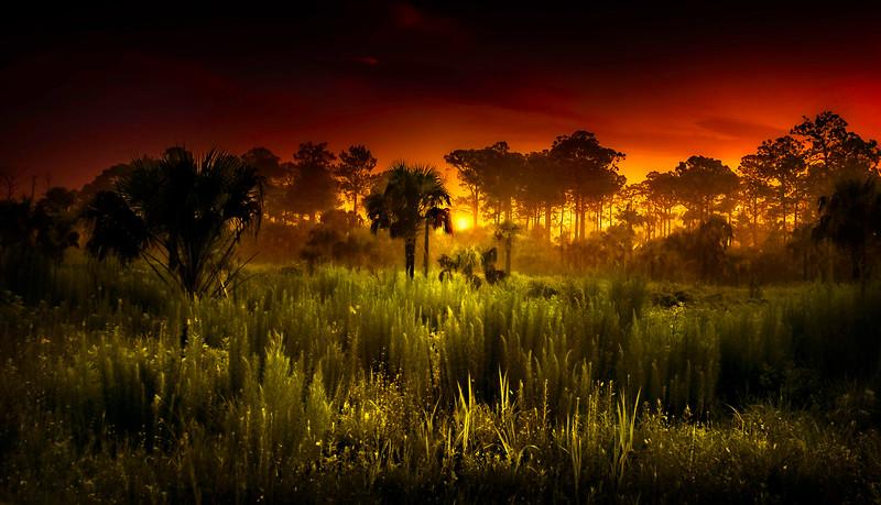 Grass-099.jpg