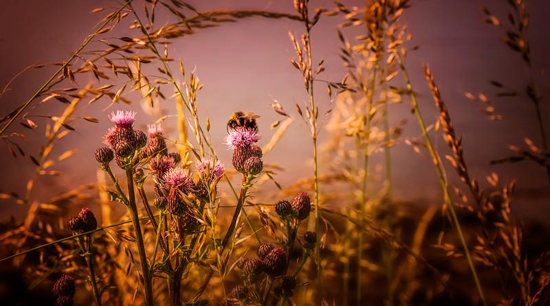 Grass-022.jpg