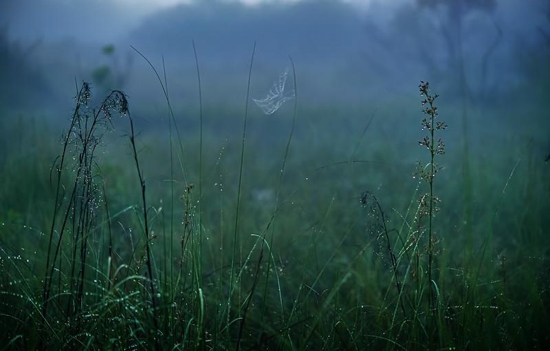 It's Never Just Grass-116.jpg