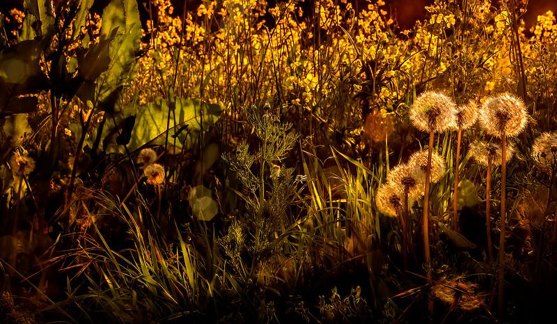 Grass-011.jpg
