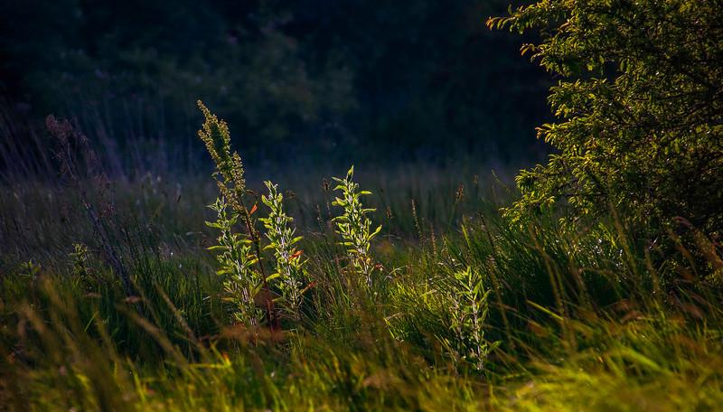 Grass-046.jpg