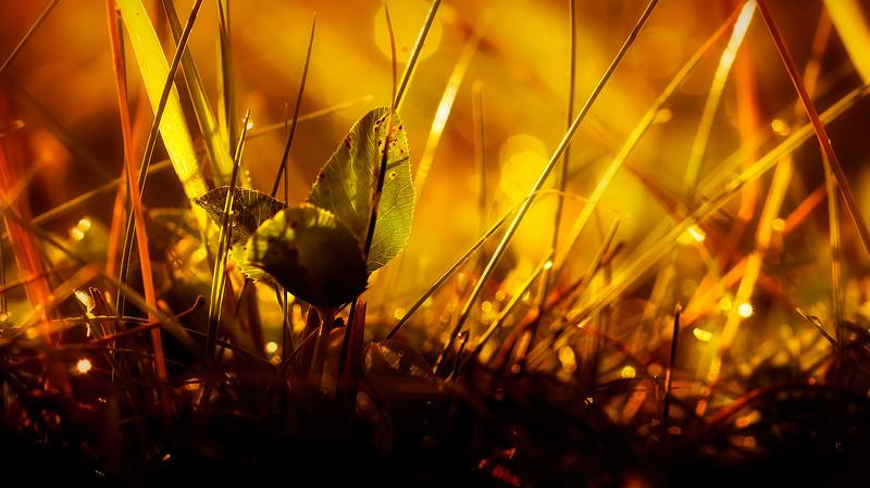 Grass-050.jpg