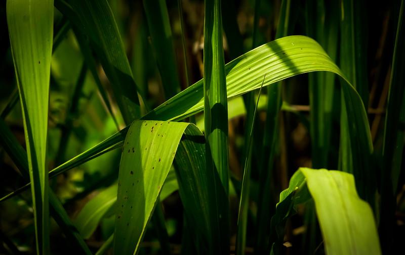 Grass-061.jpg