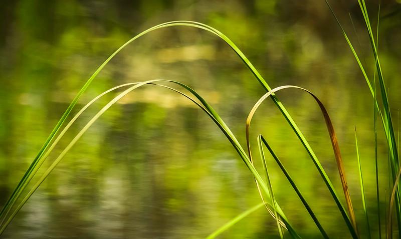 Grass-131.jpg