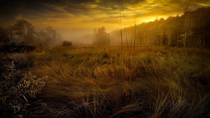 Grass-157.jpg