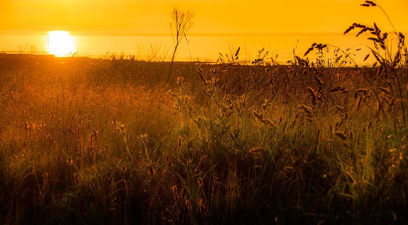 Grass-016.jpg