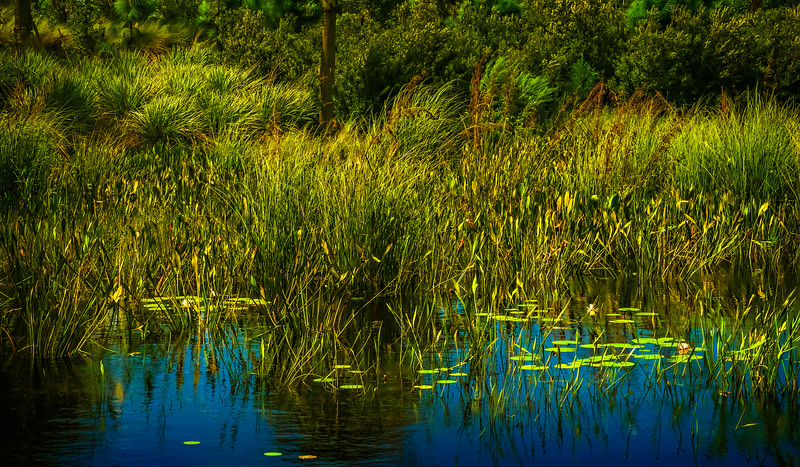 Grass-145.jpg