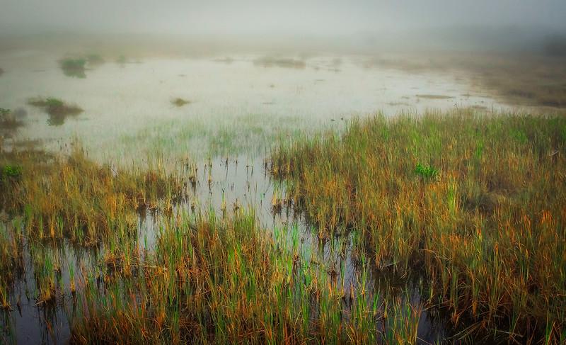 Grass-130.jpg