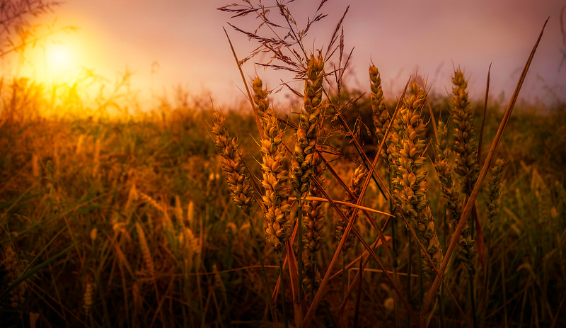 Grass-052.jpg