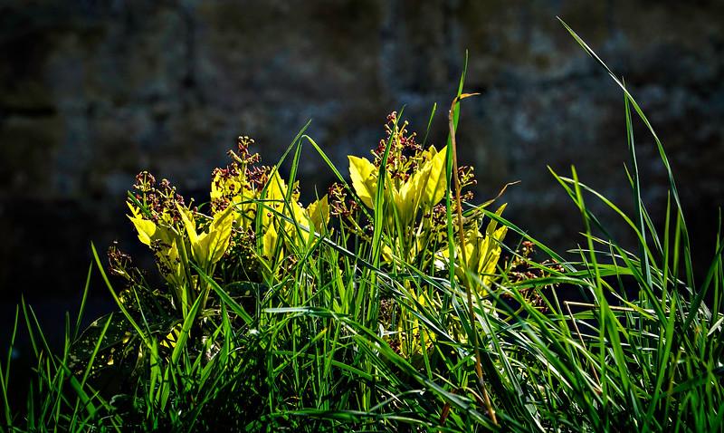 Grass-154.jpg