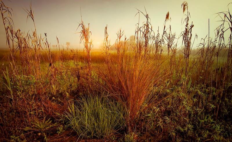 Grass-105.jpg