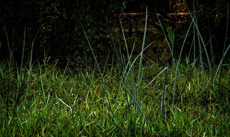 Grass-097.jpg