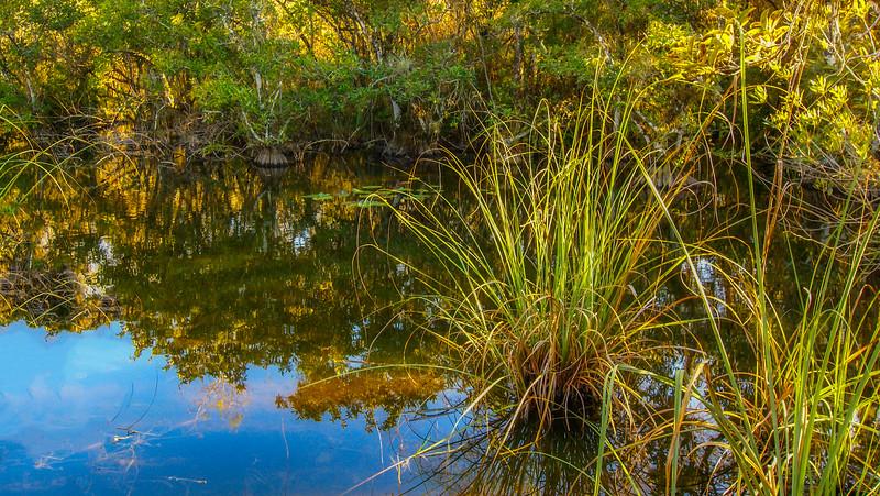 Grass-079.jpg