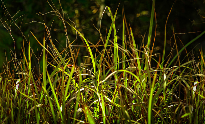 Grass-129.jpg