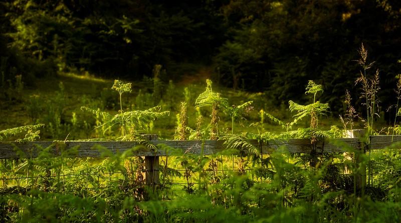 Grass-029.jpg