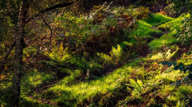 Grass-044.jpg