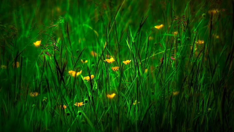 Grass-024.jpg