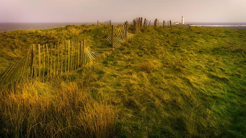 Grass-034.jpg