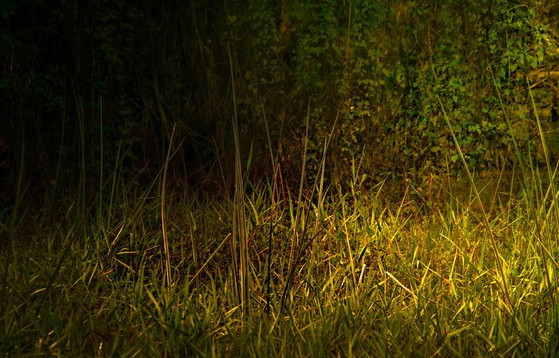 Grass-098.jpg
