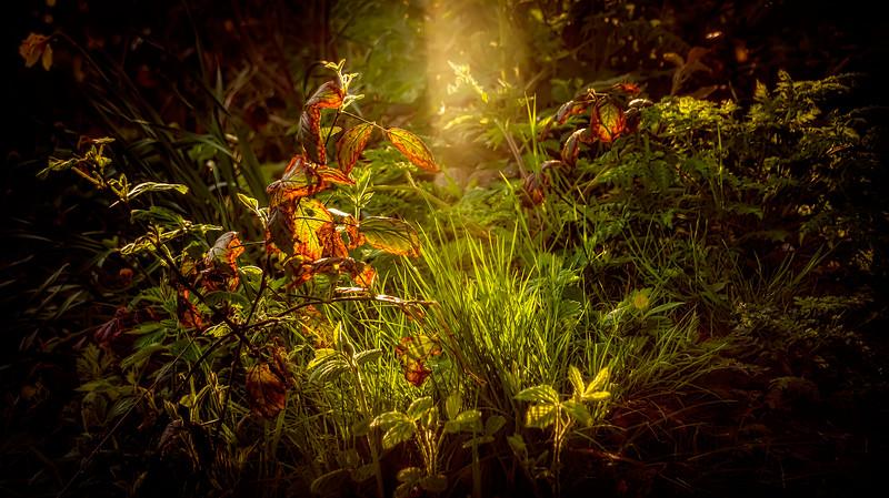 Grass-030.jpg