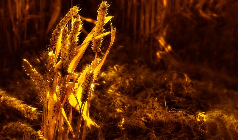Grass-028.jpg