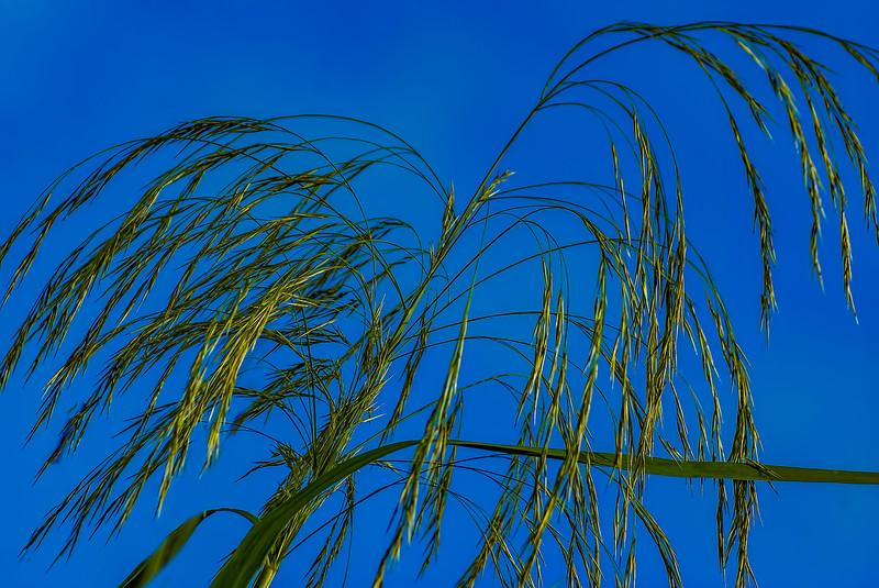 Grass-100.jpg